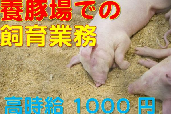 【佐賀市】動物と接するのが好きな方必見☆養豚場でのお仕事です!男女共に人気の職場です! イメージ
