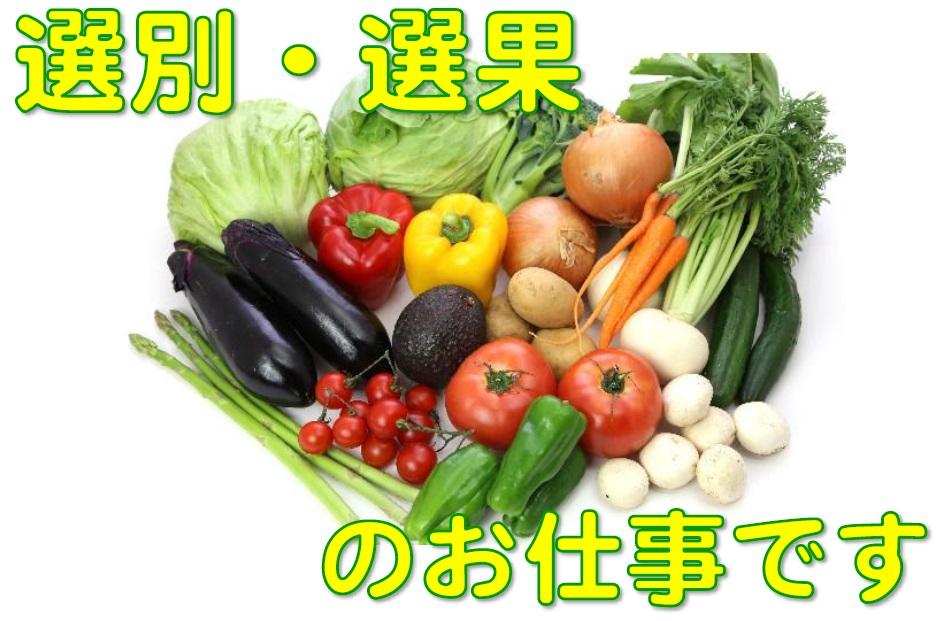 ◇即日可能!!6月末頃までの短期業務でサクッと稼ぎませんか♪◇季節の野菜!玉ねぎの仕分け作業など◇ イメージ
