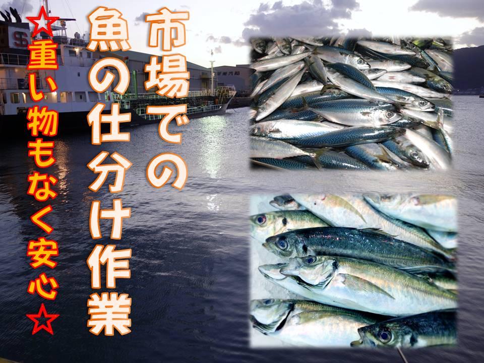 週3勤務もOKで扶養内勤務も可能!◆簡単な魚の仕分け作業◆ イメージ