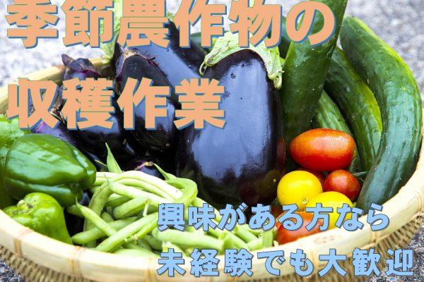 期間によって収穫する作物が違います!様々な作物と関われる魅力的なお仕事です☆ イメージ
